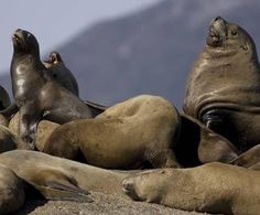 Visits to Sea Lion Rock are a staple at King Pacific Lodge