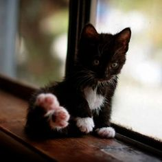 Cats And Their Kittens out Cute Names For Stuffed Animals List considering Cat And Kittens Lane Bushbury under Cute Animals Photos Cute Cats And Kittens, I Love Cats, Crazy Cats, Kittens Cutest, Pretty Cats, Beautiful Cats, Chat Maine Coon, Kitten Care, Mundo Animal