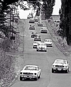 Robin Pare, Pete Geoghegan in Ford Mustangs, Bruno Carosi Jag Frank Gardner Alfa GTA and Robin Bessant Lotus Cortina on the downhill plunge towards The Viaduct, Longford Improved Production Touring Car race 1966 Australian Muscle Cars, Aussie Muscle Cars, Mustang Fastback, Mustang Cars, Ford Mustangs, Alfa Gta, Harley Bikes, Sport Cars, Motor Sport
