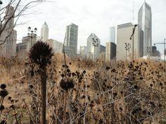 Project: Lurie Garden, Millenium Park  Location: Chicago  Designers: Gustafson Guthrie Nichol, Piet Oudolf & Robert Israel    More Info: http://www.landezine.com/index.php/2010/06/lurie-garden/