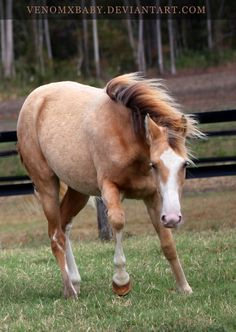 gold champagne horse - Google Search