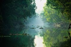 Sundarbans, a giant mangrove forest on the border of India and Bangladesh