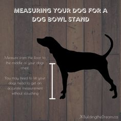 How to build your own stand for your pooch's dog bowls. Butcher Block Conditioner, Dog Bowl Stand, Wood Burning Tool, Pocket Hole, Dog Names, Pet Store, Wood Paneling, Fun Projects, Dog Bowls