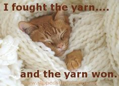 Cats and yarn. Right??
