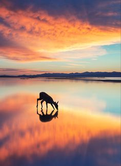 A deer drinking from a lake at sunset Fast Crazy Nature Deals. Beautiful Sunset, Beautiful World, Beautiful Places, Beautiful Pictures, Amazing Places, Belle Photo, The Great Outdoors, Lakes, Cool Photos