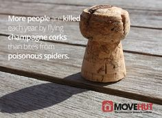 More people are killed each year by flying champagne corks than bites from poisonous spiders.