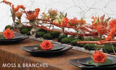 orange protea, branches and moss rocks, black plates