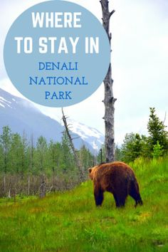 Hotel Review of the lodge at Denali Park Village.