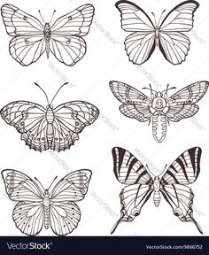 Illustration of Set of vector hand drawn butterflies vector art, clipart and stock vectors. Butterfly Illustration, Butterfly Drawing, Butterfly Tattoo Designs, Butterfly Wings, How To Draw Butterfly, Butterfly Hand Tattoo, Butterfly Outline, Butterfly Template, Mom Tattoos