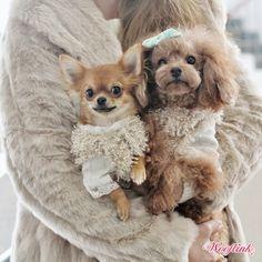 WOOFLINK - Hip designer dog clothes: HAPPY SUNDAY ♥