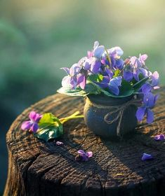 Leave flowers and perfumes wherever you pass. Plant and Grow Love Seeds in the Beautiful Garden of Life. I share here with you sweet moments. My Flower, Purple Flowers, Flower Power, Wild Flowers, Beautiful Flowers, Good Morning Flowers, Beautiful Morning, Frühling Wallpaper, Cactus E Suculentas