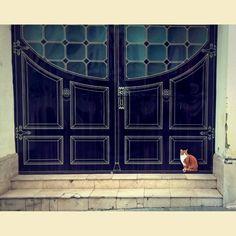 street art X cat art