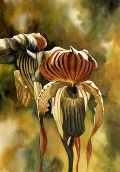 Golden ladyslipper orchid by Alfred Ng