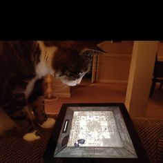 Cat Toy app for the iPad