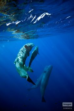 Sperm whales by ~Nudibranch182