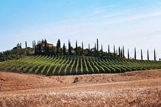 7 zile în Toscana – mai mult decât simplă o călătorie – The True Treasures Toscana, Mai, Vines, Vineyard, Europe, Italy, Summer, Travel, Outdoor