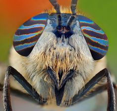 """Amazing close-ups of insect eyes Photographer polish Ireneusz irass Waledzik uses macro photography to show the colors and shapes of the eyes of insects. """"I love macro photography, I spend a lot of. Fotografia Macro, Most Beautiful Eyes, Beautiful Bugs, Insect Eyes, Insect Photos, A Bug's Life, Real Life, Bugs And Insects, Weird Creatures"""