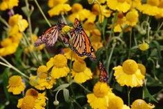 Homemade Tips for the Butterfly Garden thumbnail