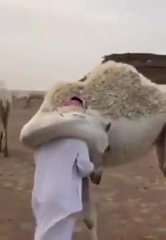 Cute Animal Videos, Cute Animal Pictures, Cute Little Animals, Cute Funny Animals, Nature Animals, Animals And Pets, Tier Fotos, Animal Memes, Animals Beautiful