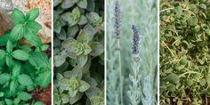 Αρωματικά φυτά που μεγαλώνουν σε νερό Father And Son, Backyard, Garden, Flowers, Plants, Projects, Sons, Log Projects, Patio