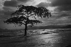 Ponta da Praia, Santos, Brasil - By Araquém Alcântara