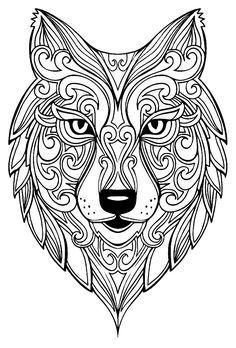 Superbe tête de loupA partir de la galerie : Animaux