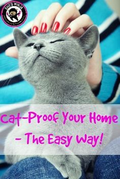 Cat Proof your home - the easy way!