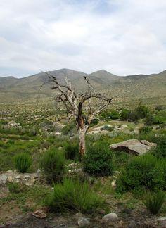 un árbol que no resistió una larga sequía de años, permanece como símbolo de la lucha por sobrevivir...