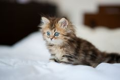 One of Misty's kittens from chapter 12