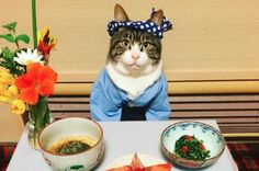 Japanese 'cosplay cat' plays dress up for elaborate meals