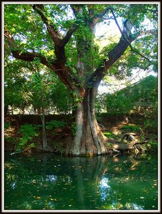 Wimberley, Texas. Cypress Creek