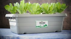 Texas-based consumer health advocate Mike Adams of non-profit organization Food Rising has developed a new soil-free, non-electric, home-based food grow system called the Mini-Farm Grow Box.