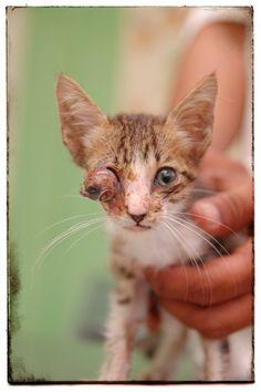 Cat zithromax