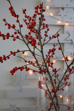 I have berries like this in my house. They are so pretty