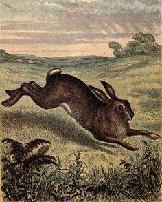 Vintage Ephemera: animals