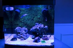 Minimalist Aquascaping - Page 55 - Reef Central Online Community