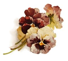 Autumn's Crowning Glory ~ PNG file, pansies (transparent background)