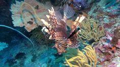 Richelieu Rock World Class Diving, Thailand