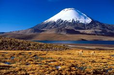 Lauca National Park is a natural park in the Arica and Parinacota Region in #Chile. It features the Río Lauca River. Explore more of Chile with www.chilecarsrental.com. Book now for amazing offers. #travel