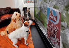 First advert pitched at dogs appears on British TV