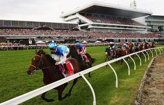 Galopprennen: Zwei Pferde sterben beim Melbourne Cup - Eines der bedeutendsten Pferderennen der Welt ist vom Tod zweier Tiere überschattet worden: Der japanische Favorit Admire Rakti und der siebtplatzierte Araldo starben beim Melbourne Cup nach dem Zieleinlauf. Sieger wurde zum ersten Mal ein deutsches Pferd.