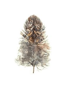 Owl Feather watercolor: Focus on the natural side of feathers with a beautiful watercolor print. The soft details and neutral colors are immediately soothing. A collection of several feathers in different sizes would be gorgeous.