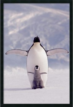 "0-028832>37x25"" Penguin and Chick Framed Art Gel Coated"