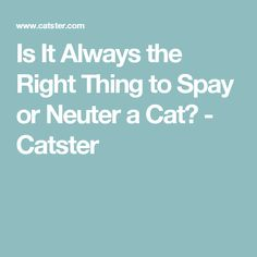 Is It Always the Right Thing to Spay or Neuter a Cat? - Catster
