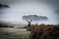 Surveying his Kingdom by Derik128 on Flickr.
