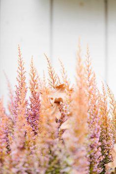 Niin magee kanerva | KUKKALA Backyard Ideas, Wallpaper Backgrounds, Beautiful Flowers, Cool Pictures, Dandelion, Flora, Leaves, Gardening, Spring