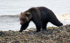 Планета Земля и Человек: Хищники осваивают Онежский полуостров