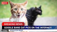 Breaking news: Google bans cat pics on the internet! Apocalypse Meow! Two cats, one facing the camera, mouth open in surprise.