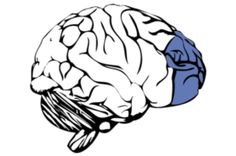 A New Brain-Based Marker of Stress Susceptibility | neuroscientistnews.com