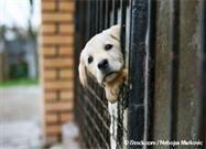 keeping pet safe